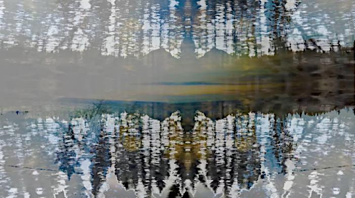 Vidéopoème La forêt prend son temps pendant qu'un grand silence me regarde